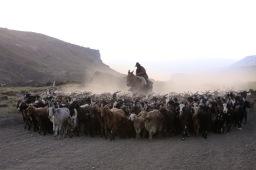 Arreo: el nuevo western cuyano
