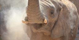 Los elefantes se preguntan… ¿qué pasa en África?
