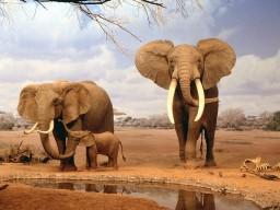 Los elefantes se preguntan… ¿qué pasa con los transportes africanos?